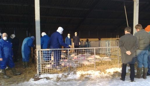 De dieren liggen dood in de buitenstal.